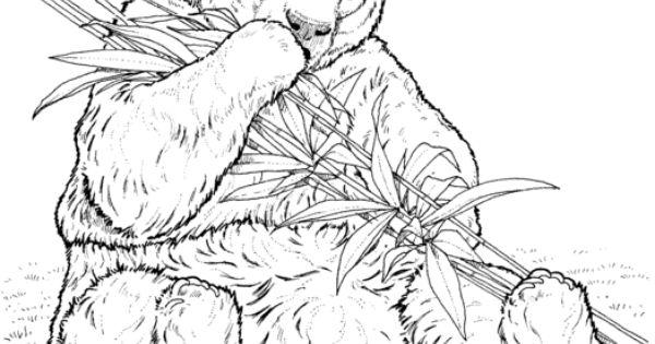 Panda Eat Bamboo Coloring page