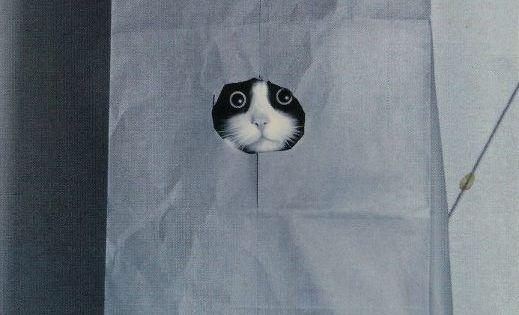 ♥ crazy cat