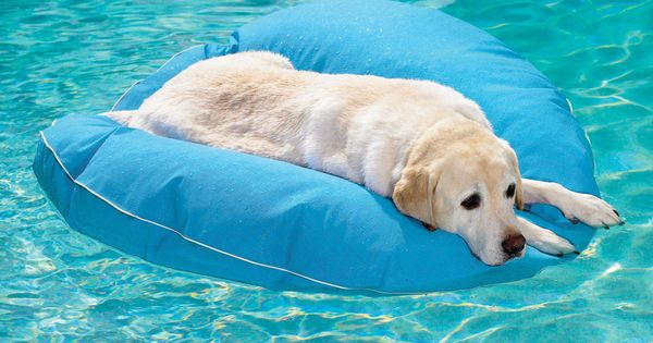 Outdoor Dog Accessories and Toys: Dog Pool Float and Lounger from Frontgate.