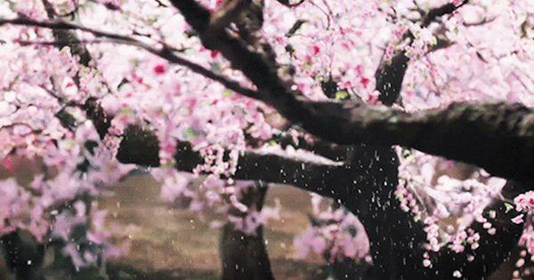 Ten Miles Of Peach Blossoms Tumblr Peach Blossoms Peach Blossom Tree Cherry Blossom Wallpaper