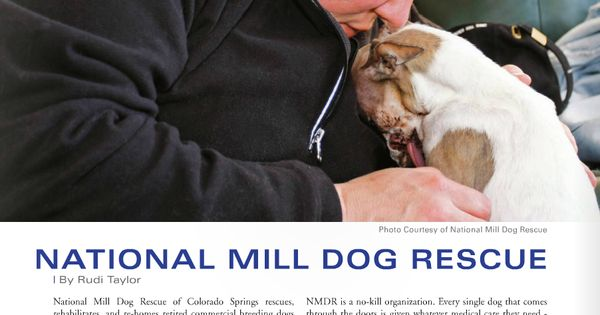 """should puppy mills be shut down As the report shows, even breeders with a history of animal welfare act violations can still be allowed to operate, which is why it is so difficult """"shut down"""" commercial breeding operations that's why it's so important to educate consumers about puppy mills and how they're connected to pet stores online."""