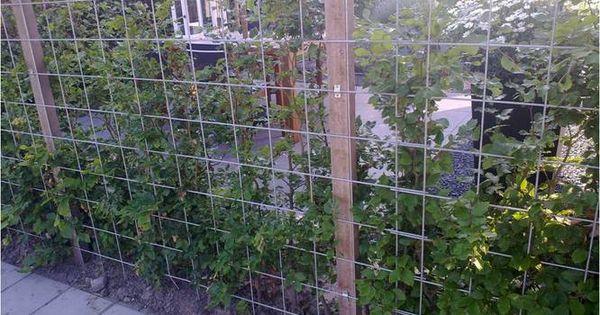 Tuinafscheiding van gegalvaniseerde matten tuin pinterest tuin - Wijnstokken pergola ...