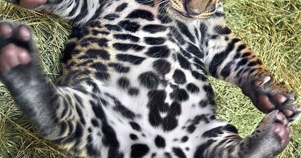baby leopard yoga.