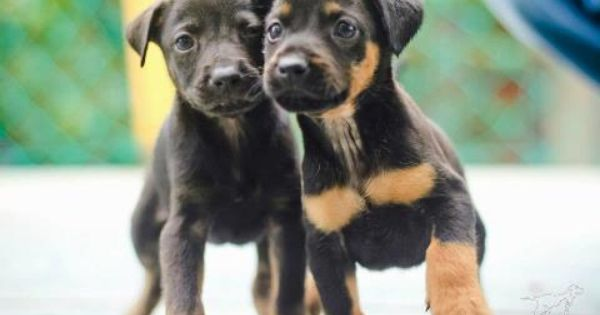 Meet Hope Faith The Two Pups That Rallied Malaysian Volunteers