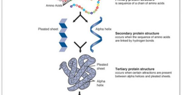 Protein Structure Biochemistry Biology Plant Science
