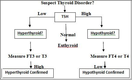 Pin On Hyperthyroidism Hypothyroidism