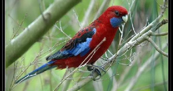 روعة الخلق صور اجمل الوان الطيور منتدى جدايل Animals Bird