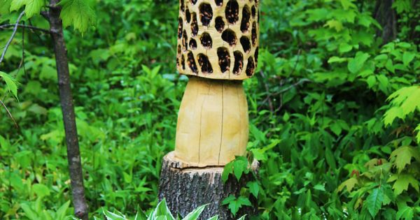 Chainsaw carving of a morel mushroom roger f wolford