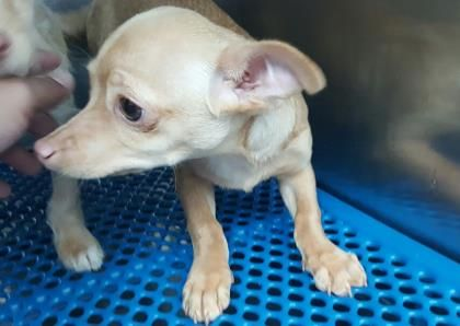 Update Current Status Is Unknown 35054642 Located In El Paso Tx