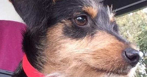 Sophie Pets Dog Adoption Kitten Adoption