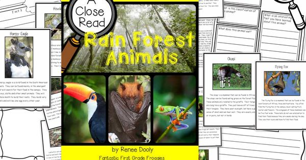 Forest animals, Forests and Rain on Pinterest