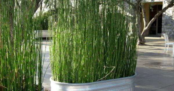 Use Galvanized Metal Tubs To Plant Tall Grass Or Bamboo To