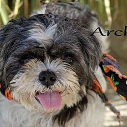 Coldwater Michigan Shih Tzu Meet Archie A For Adoption Https