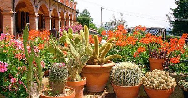 arte y jardinera diseo de jardines cactus el desierto en casa cactus pinterest cactus