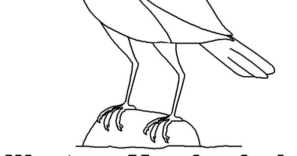 Prairie animals meadowlark little house on the prairie for Meadowlark coloring page