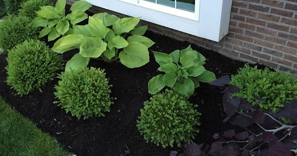 sum and substance hostas and boxwoods gardening. Black Bedroom Furniture Sets. Home Design Ideas