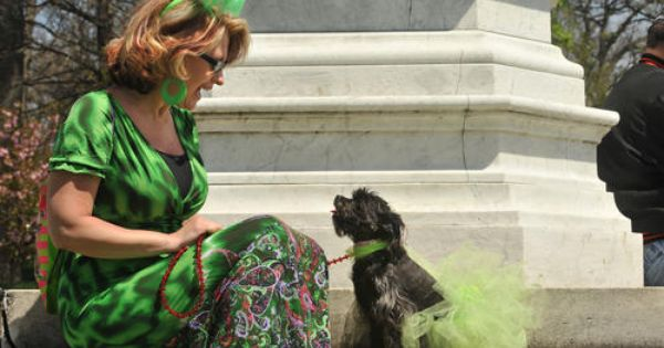 Kathy Lane Of Glen Arm And Her Yorkie Poo Lola Are All About The Green Ensembles Yorkie Pets Animals
