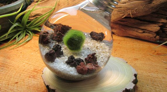 24 id es d coratives avec de la mousse v g tale mousse vegetale mousse et vegetal Mousse vegetale deco idees