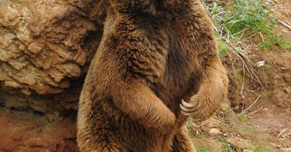 Cmaras de sexo de osos gays - esbongacamscom