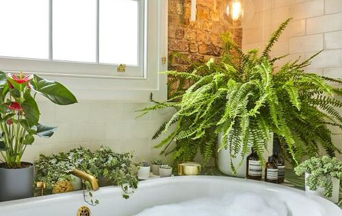 24 Stunning Pictures Of Ferns In Bathrooms In 2021 Amazing Bathrooms Bathroom Plants Bathroom Decor