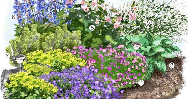 Projet am nagement jardin les vivaces fleuries au jardin for Amenagement jardin 66