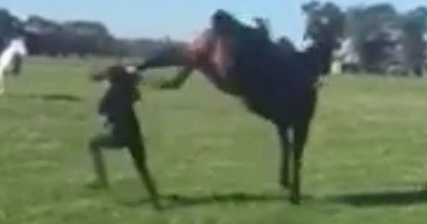 Horse Kicks Girl In Head Because She Had A Helmet On Horse Bites