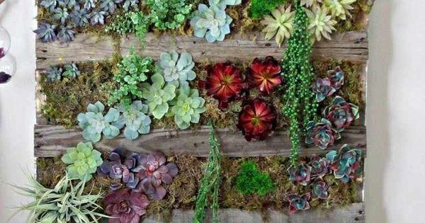 vertikaler garten mit sukkulenten und echeverien bepflanzt. Black Bedroom Furniture Sets. Home Design Ideas