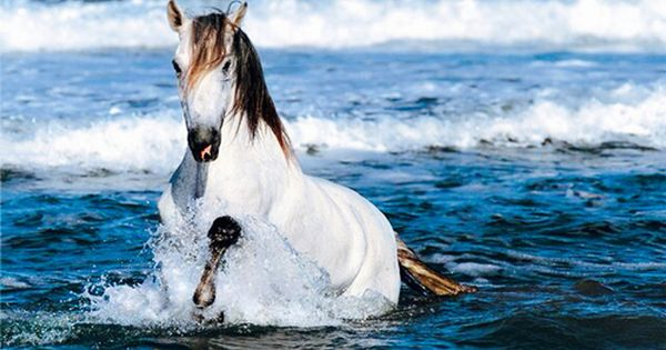 White Horse Running In Water Hd Desktop Wallpaper High Definition Fullscreen Mobile By Anastasiya We Heart It Horses Horse Wallpaper Animals Beautiful
