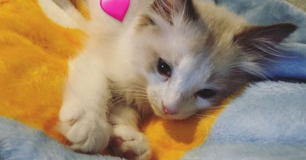 Epingle Par Lisa Sur Lisa Pets Thailande