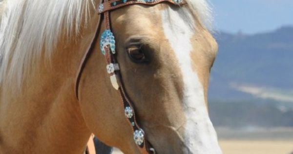 Jozee Girl Crystal Tack, Jewelry and Accessories, Crystal Stirrups and More ~