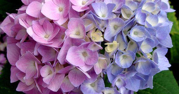 bleuir vos fleurs le marc de caf les fleurs bleues et marc de caf. Black Bedroom Furniture Sets. Home Design Ideas