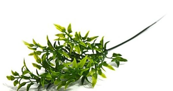 Galazka Zielona Dodatek Do Bukietu 32cm 6782588242 Oficjalne Archiwum Allegro Herbs Plants Wreaths