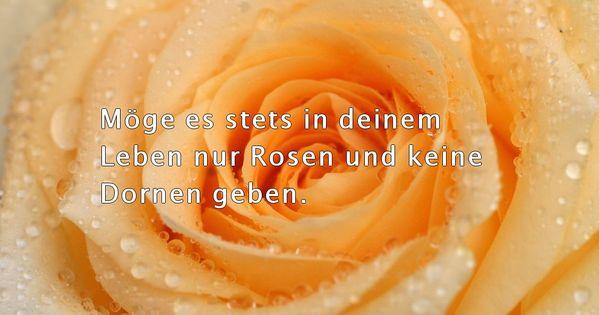 Geburtstag zum rosen sprüche Rosen Zitate