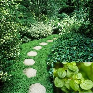 Pretty Ground Cover Ground Cover Outdoor Gardens Natural Garden