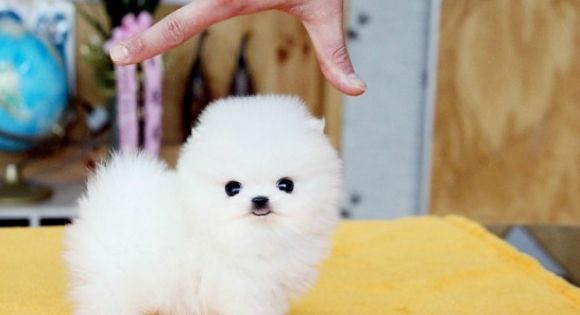❤ small dog... so adorable!