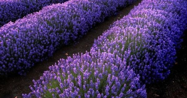 Lavender field, Provence, France. So Beautiful! Purple IS my fav color!