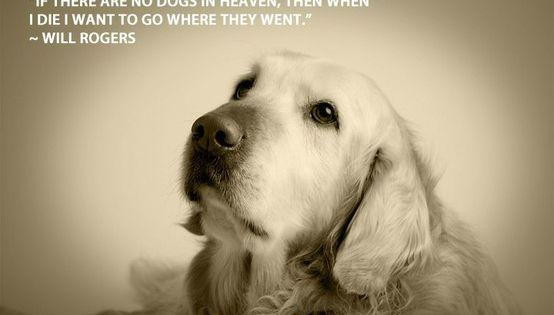 best dog quotes | ... dog quotes dog lover quotes best dog