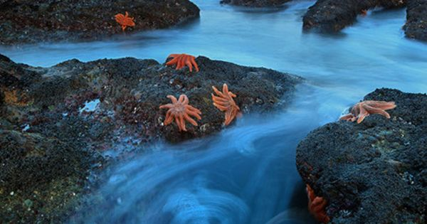 Starfish Colony, South Island, New Zealand. One of the sickest places that