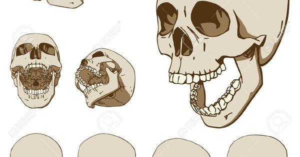 Teschio umano cerca con google drawings pinterest for Teschi da disegnare