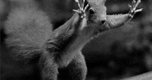 Funny Animal Pictures (14 Pics) | Postris ...........click here to find out