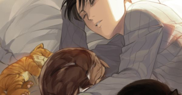 Levi Those Might Be Stray Cats And Levi Has Taken Them To His