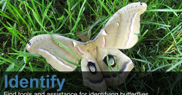 Butterflies And Moths Of North America Collecting And Sharing Data About Lepidoptera Colorful Moths Nature Kids Moth