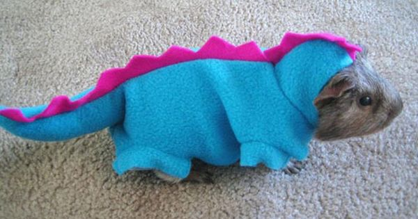 Dinosaur guinea pig costume. How adorable! I'm probably going to make this!