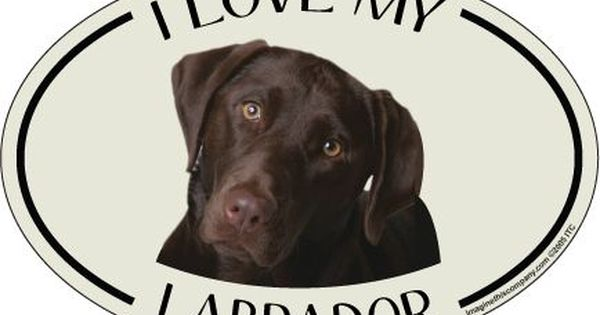 I/'M NOT JUST A DOG PERSON I/'M AN AFGHAN HOUND DADDY FRIDGE MAGNET GIFT DOG