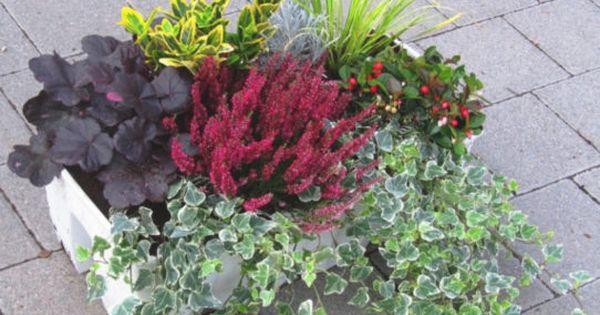 balkonpflanzen winterhart pflegeleicht | kunstrasen garten | dies,