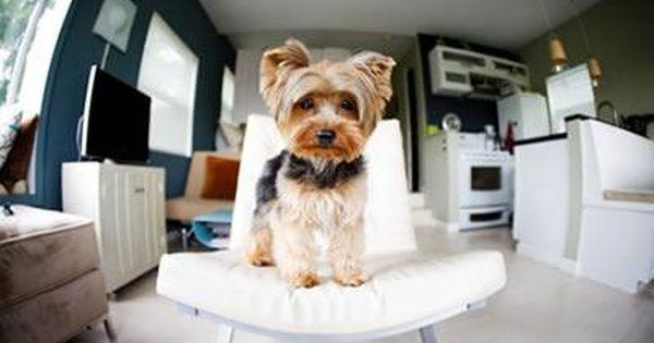 Decoracion De Un Piso Pequeno Con Mascotas Casas Para Perros Cuchas Para Perros Casetas Para Perros