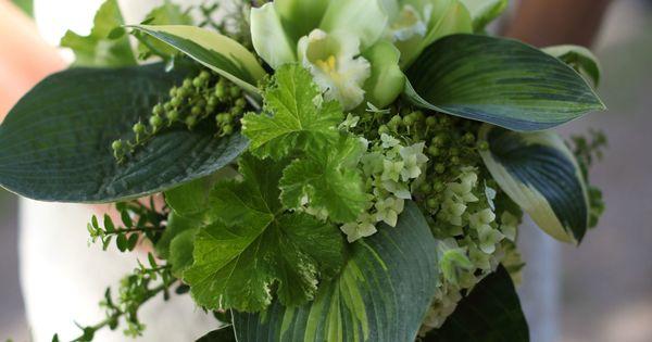Tilley Photography   Flowers: Joe Pye Weeds Garden