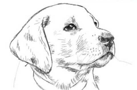 seeing eye dog coloring pages - photo#24