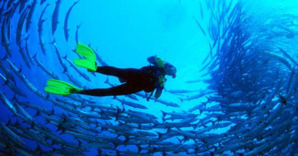 Novice Diving Off Sabah S Coast Sabah Scuba Diving Courses Diving