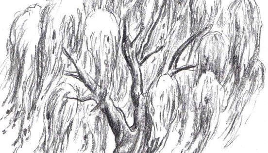 willow tree for a tattoo